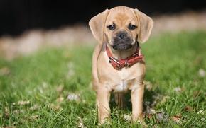 Picture summer, dog, puppy