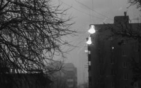 Picture light bulb, fog, tree, branch, hopelessness, b/W