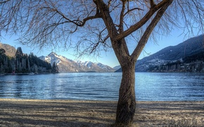 Picture forest, trees, mountains, nature, lake, photo, tree, shore, photographer, Ian Rushton, Ian Rushton