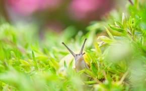 Picture grass, nature, snail
