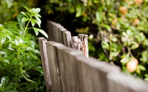 Picture leaves, macro, background, widescreen, Wallpaper, the fence, the fence, wooden, wallpaper, leaves, widescreen, background, macro, …