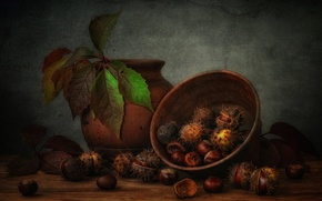 Picture leaves, fruit, bowl, still life, chestnuts, pot