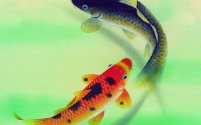 Wallpaper pair, carp, fish