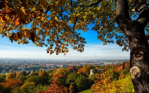 Picture autumn, trees, bridge, the city, tree, view, home, Germany, Dresden, hill, Germany, Dresden, Germany