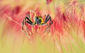 Wallpaper macro, spider, spider