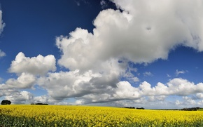 Picture the sky, clouds, Field