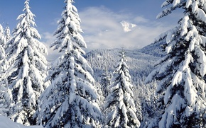 Wallpaper winter, forest, nature, tree