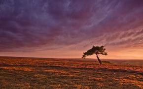 Picture field, the sky, sunset, tree, horizon, purple sky