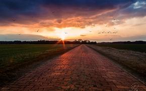 Picture road, birds, dawn, field