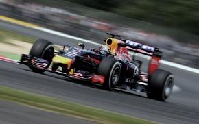 Picture Racer, Formula 1, Vettel, Champion, Sebastian, RB10