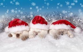 Picture snowflakes, sleep, kittens, trio, caps, Trinity, sleeping