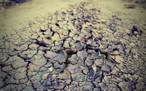 Picture summer, earth, heat, drought, 2016