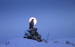 Picture night, bird, eagle