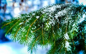 Picture winter, macro, snow, needles, nature, tree, spruce, Branches, needles, bokeh