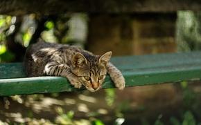 Picture look, Koshak, Tomcat, Kote
