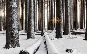 Wallpaper winter, forest, snow, trees, the rays of the sun