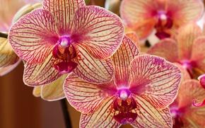 Picture petals, exotic, Orchids