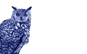 Wallpaper white, background, owl, bird, drawn