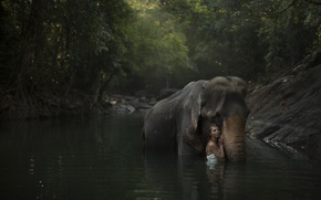 Picture forest, girl, river, model, elephant