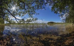 Picture trees, branches, lake, reed, Finland, Finland, Lake Cariari, Kouvola, Karijarvi Lake, Kouvola