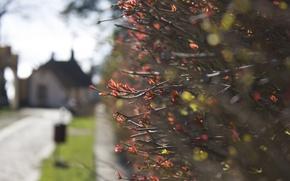 Picture blur, the bushes, shrub, focus