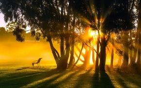 Picture summer, light, trees, landscape, morning