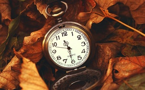 Picture leaves, macro, nature, time, watch