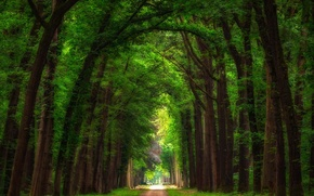 Picture summer, trees, Park, track, Netherlands, alley