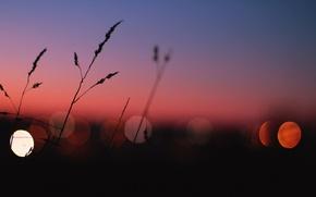 Wallpaper lights, grass, twilight, sunset, dusk, globes