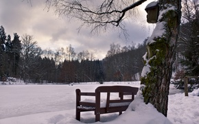 Picture Snow, Seat, Trees