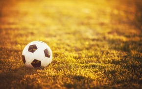 Picture grass, sport, the ball