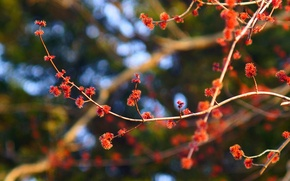 Picture flowers, nature, plant, branch