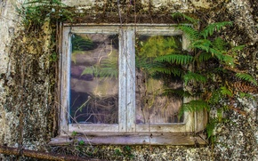 Picture house, background, window