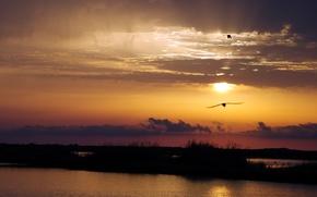 Picture landscape, sunset, birds, river