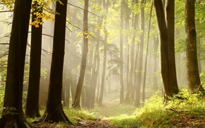 Picture forest, grass, rays, trees, firewood