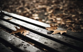 Picture leaves, nature, bench