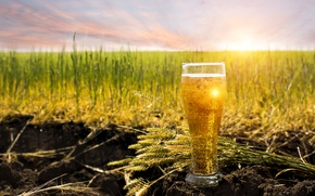 Picture field, the sky, grass, the sun, bubbles, earth, glass, horizon, ears, drink, bokeh