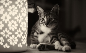 Picture cat, cat, lamp, black and white, flowers, night light, sitting, monochrome
