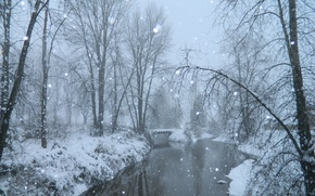 Picture winter, snow, trees, fog, pond, frost, Nature, the bridge, trees, bridge, winter, snow, fog, pond, ...