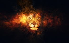 Picture fantasy, lion, animal, artistic, fire.flames