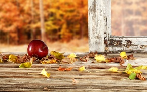 Picture autumn, forest, leaves, frame, Apple