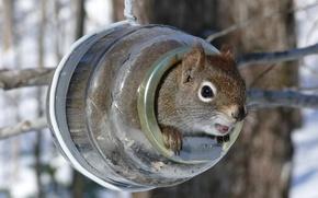 Picture winter, Protein, feeder