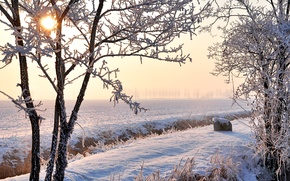 Picture winter, frost, field, the sun, snow, trees