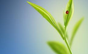 Picture sheet, beetle, minimalism