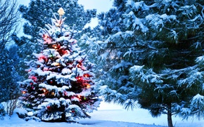 Picture lights, holidays, Christmas, nature, snow, tree, New Year, Santa
