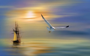 Picture water, seagull, tall ship at sunset
