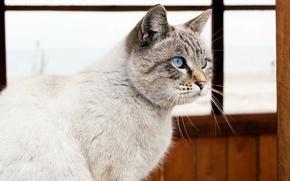 Picture sea, cat, eyes, window
