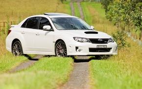 Picture white, grass, trees, trail, Subaru, white, grass, wrx, impreza, tree, Subaru, Impreza