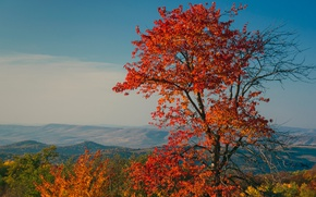 Picture the crimson, leaves, autumn, trees, mountains, landscape