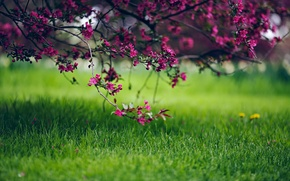 Wallpaper flowers, bokeh, tree, nature, grass, spring